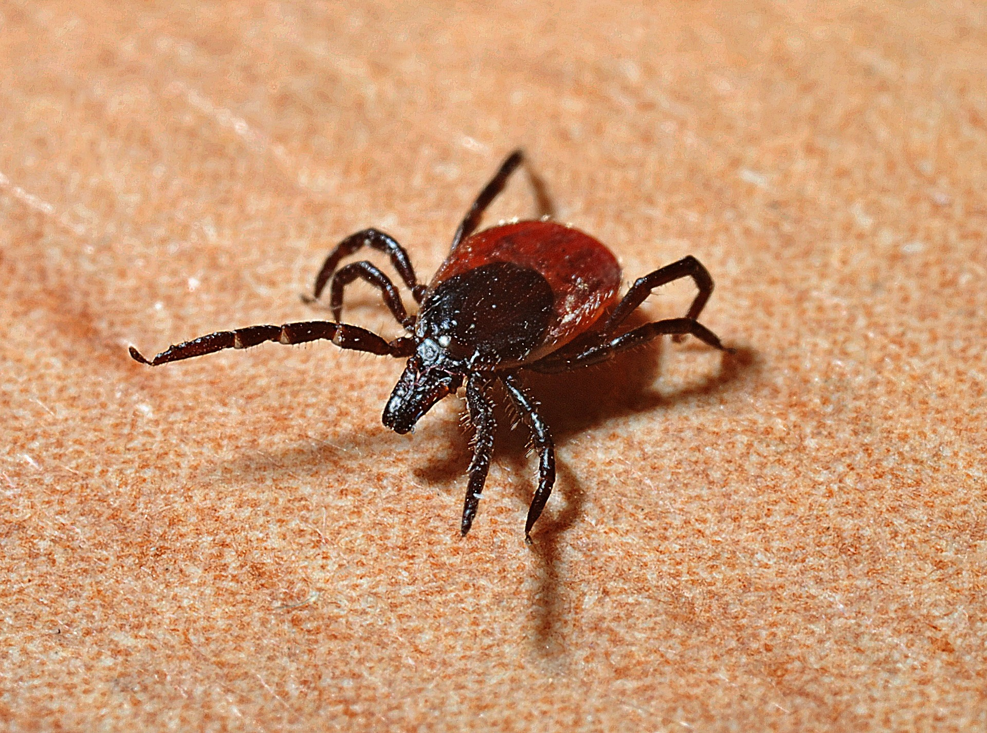 Protecting your pets from Ticks